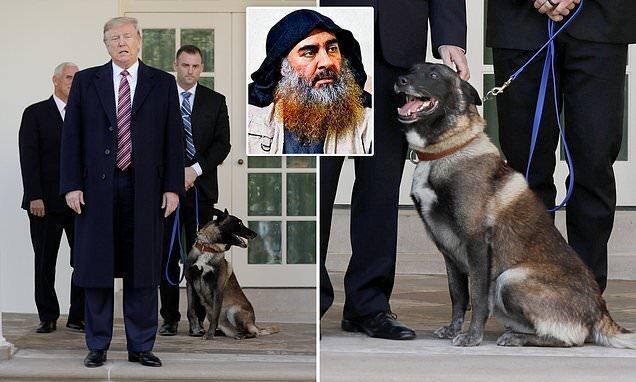 میزبانی ترامپ در کاخ سفید از سگ تعقیب کننده البغدادی